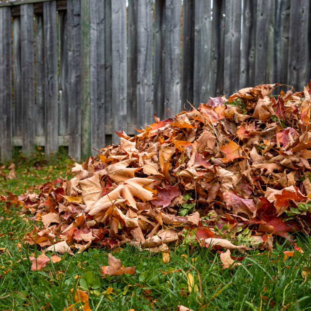 """Autumn leaves raked up in a backyard pile"" stock image"