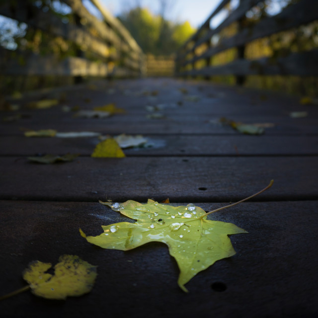 """""""Crossing over to Autumn"""" stock image"""