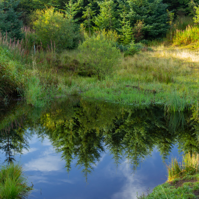 """Still pond with tree reflections"" stock image"