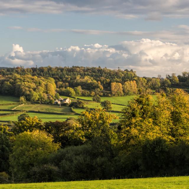 """""""Little Haldon Heath - Autumn evening"""" stock image"""