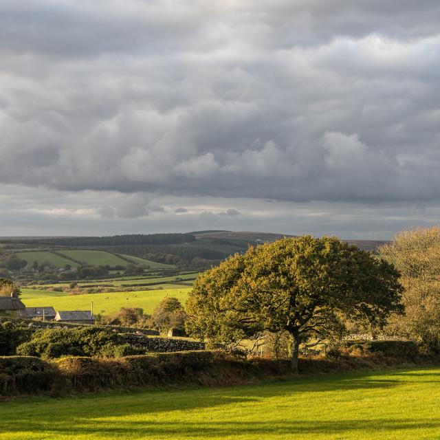 """""""West Webburn valley - Dartmoor"""" stock image"""