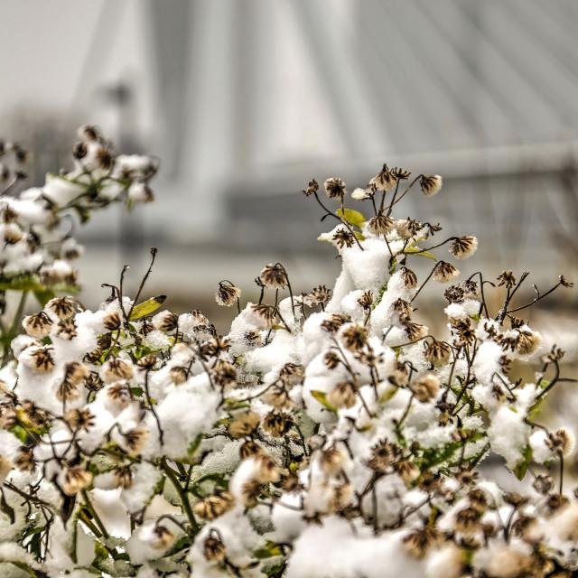 """Winter at Leuvehoofd park"" stock image"