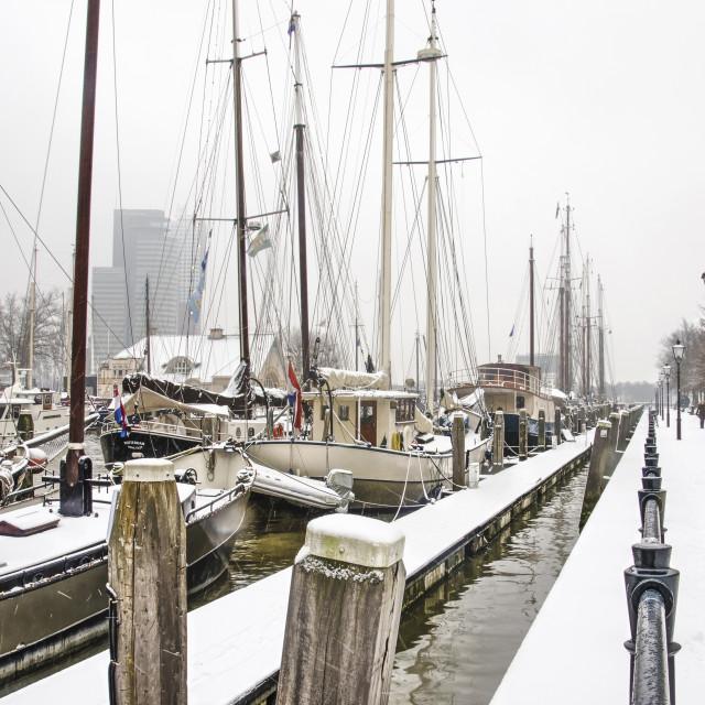 """""""Rotterdam marina in winter"""" stock image"""