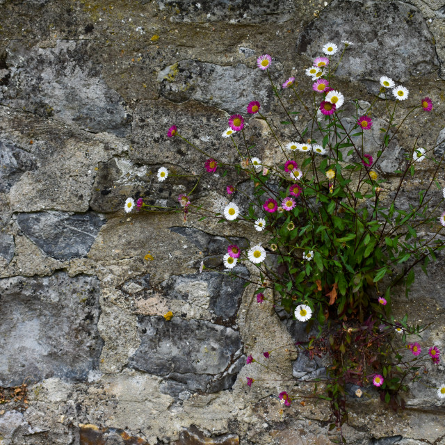 """""""Floral Wall"""" stock image"""