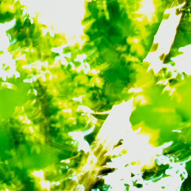 """""""Green and Yellow"""" stock image"""