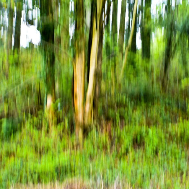 """""""Springing in the Forest"""" stock image"""