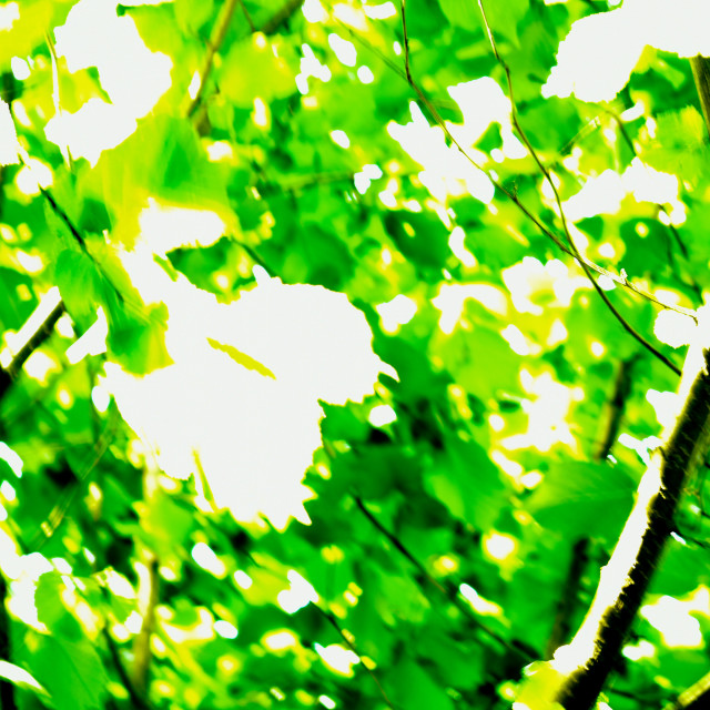 """""""Sunlight Through the Leaves"""" stock image"""
