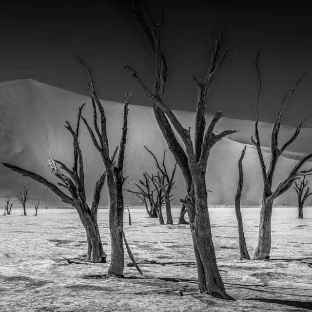 """""""Dead Vlei Forest - Black and White"""" stock image"""