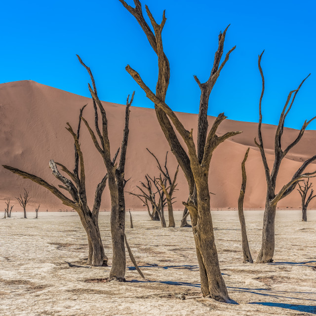"""""""Dead Vlei, Soussusvlei, Namibia"""" stock image"""