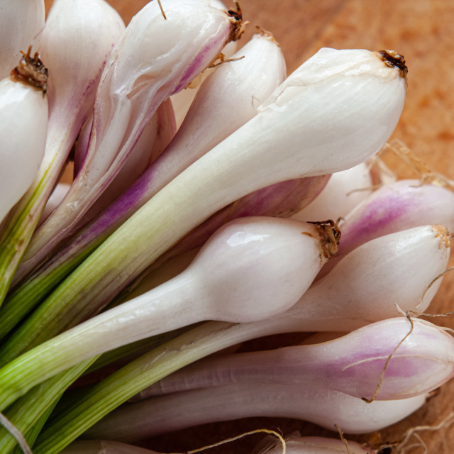 """""""Little White and Pink Onions, cebollitas"""" stock image"""
