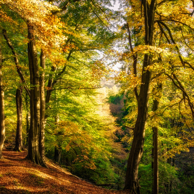 """Strikes Wood in Autumn"" stock image"
