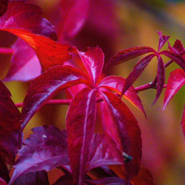 """Autumn leafs"" stock image"