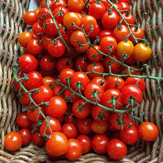 """Fresh cherry tomatoes in a wicker basket"" stock image"