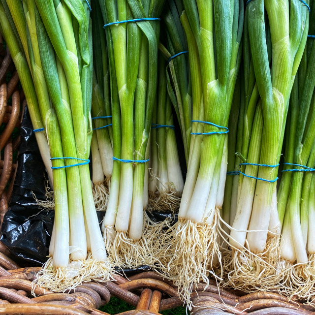"""Spring onions in a wicker basket"" stock image"