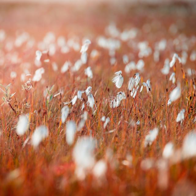 """""""Swamp Flower"""" stock image"""