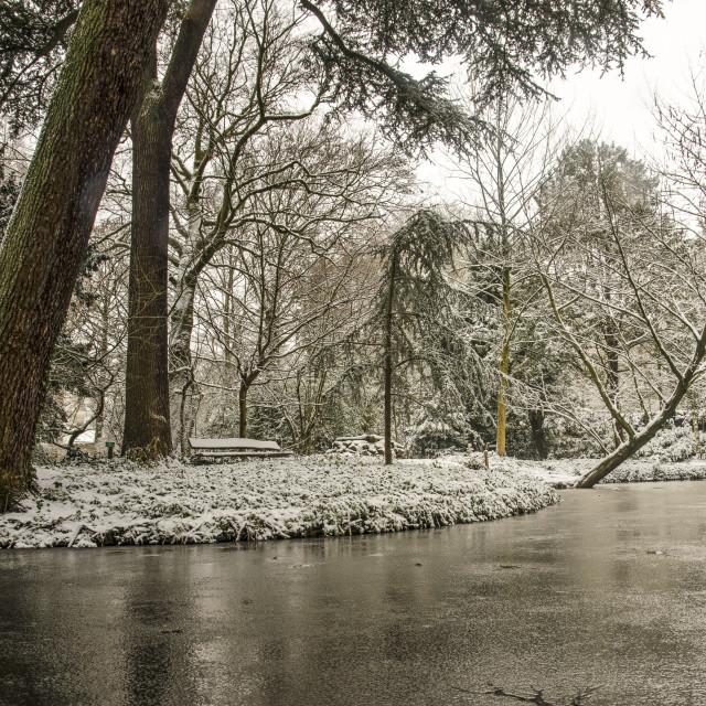 """""""Winter in Schoonoord Park"""" stock image"""