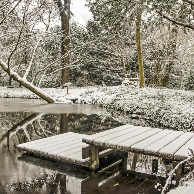 """""""Schoonoord Park in winter"""" stock image"""