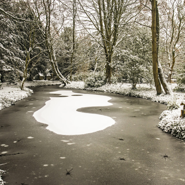 """""""Frozen pond in Schoonoord Park"""" stock image"""