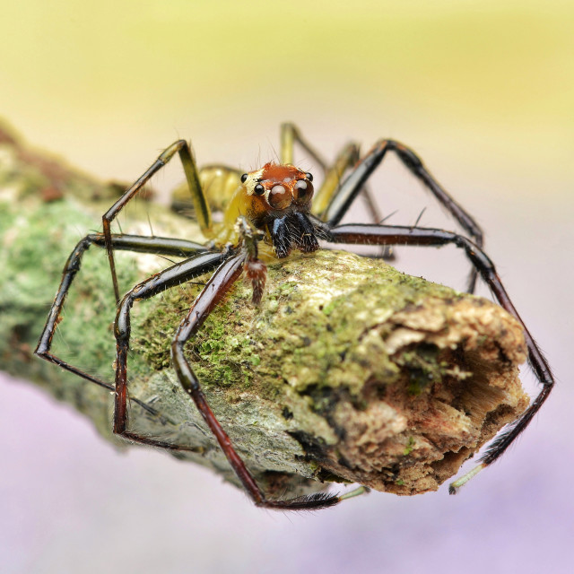"""Spider On Tree Trunk"" stock image"