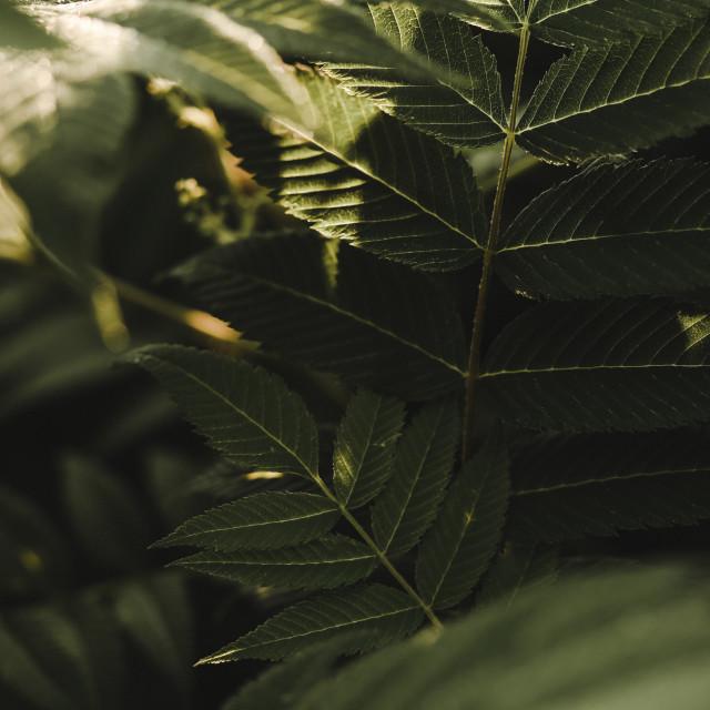 """""""morning light on spirea"""" stock image"""
