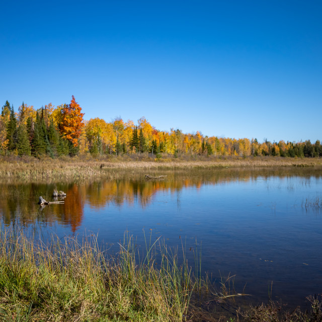 """Colorful autumn forest across wetlands"" stock image"