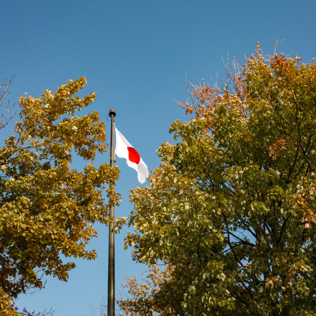 """""""A Japanese Flag (in Canada)"""" stock image"""