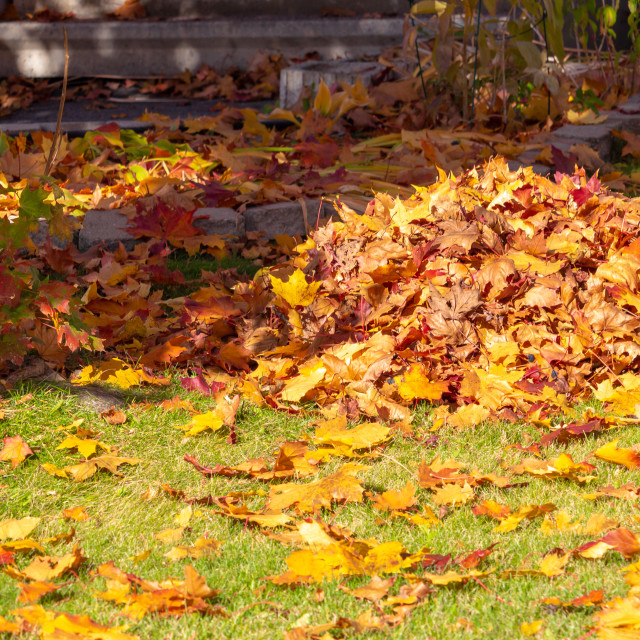 """Autumn Leaves Raked into a Pile on a Lawn"" stock image"