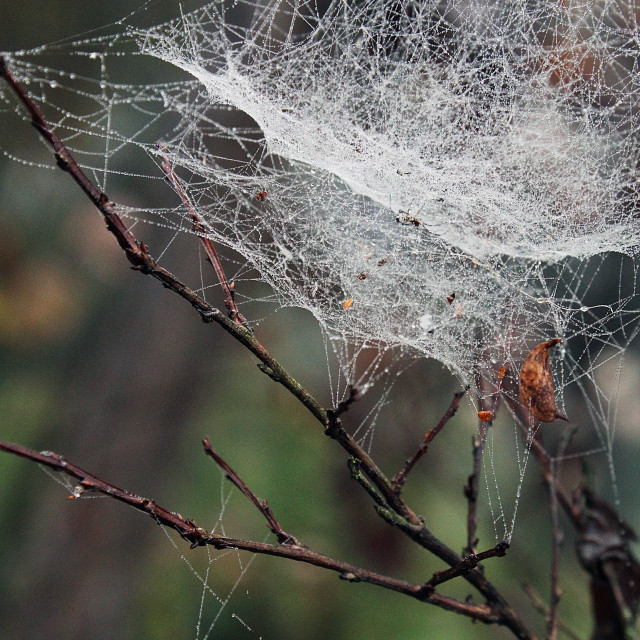 """""""a spider web"""" stock image"""