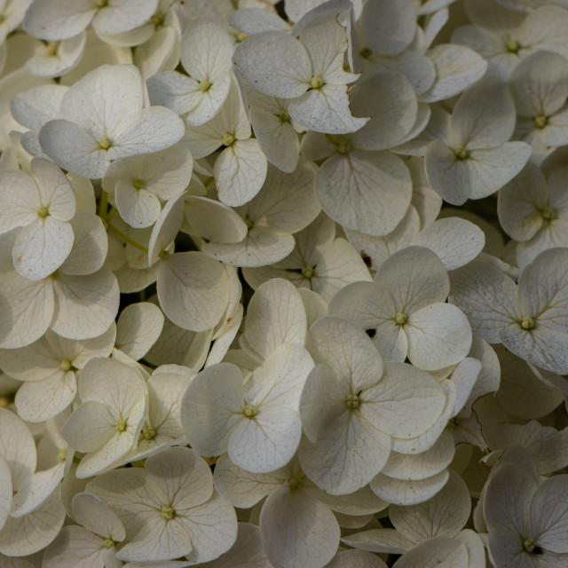 """""""Flower power"""" stock image"""