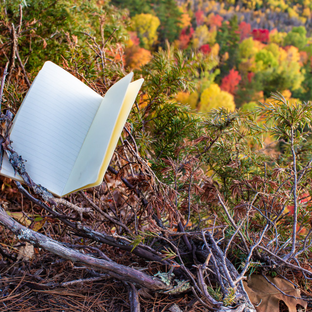 """A Blank Notebook Over a Fall Forest"" stock image"