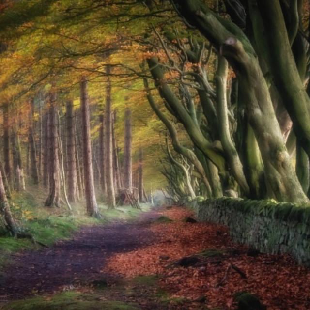 """Autumn Trail"" stock image"
