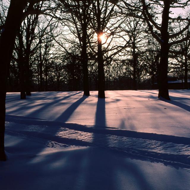 """Tracks Across Fresh Snow in the Ozarks"" stock image"
