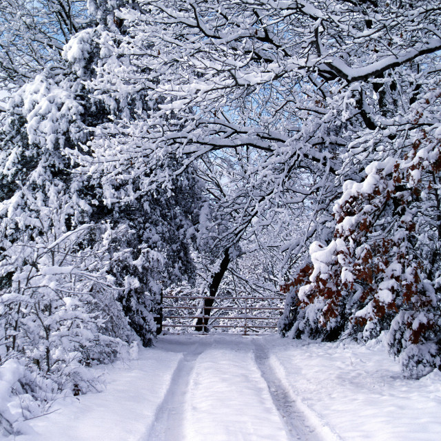 """Ozarks Winter Wonderland"" stock image"