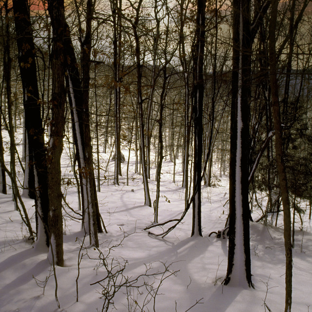 """Snow Scene Mark Twain National Forest Missouri"" stock image"