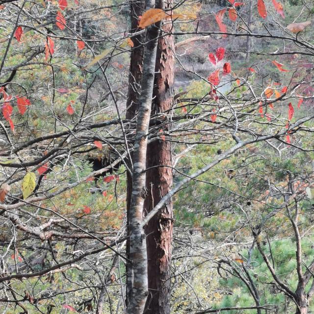 """Onw Tree Hill"" stock image"