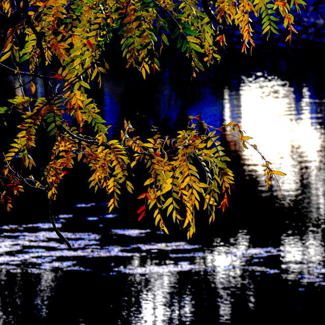 """""""Yellow Japanese Maple over sunlit river"""" stock image"""