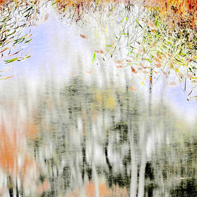 """""""Weeping Willow in Autumn"""" stock image"""