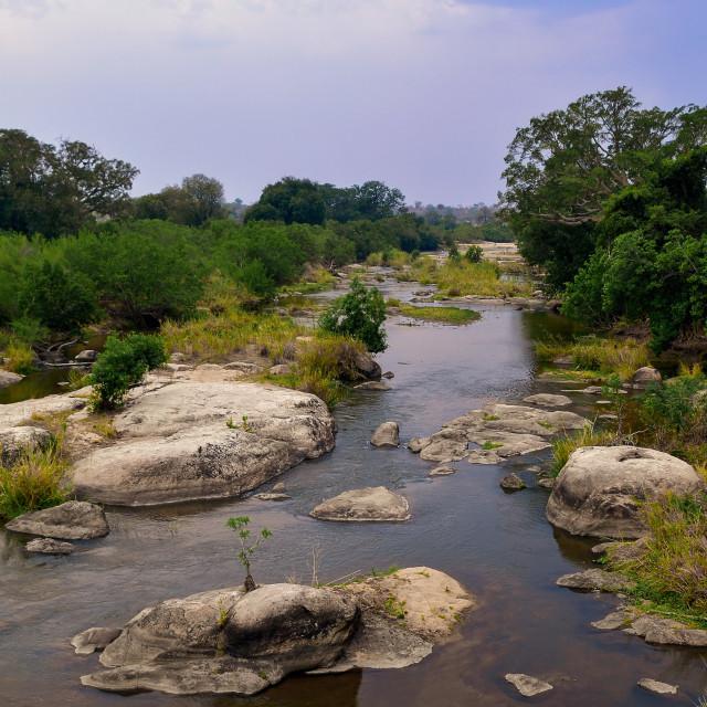 """""""Kruger National Park"""" stock image"""