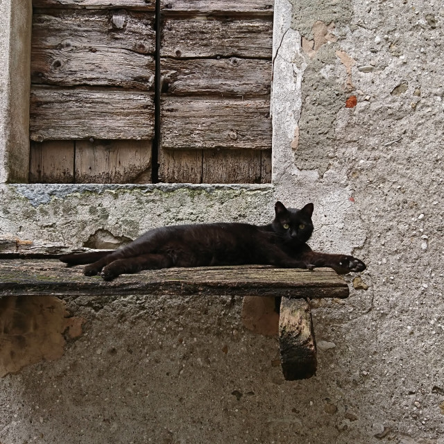 """Cat in Italy"" stock image"