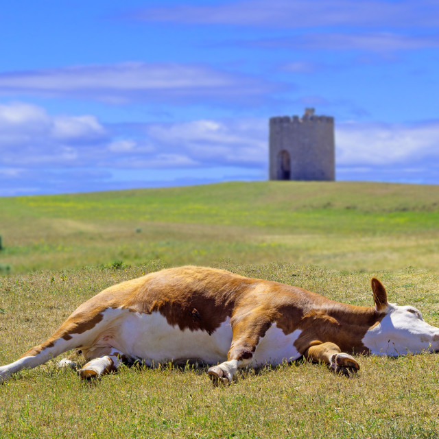 """Uphill Tower with reclining cow"" stock image"