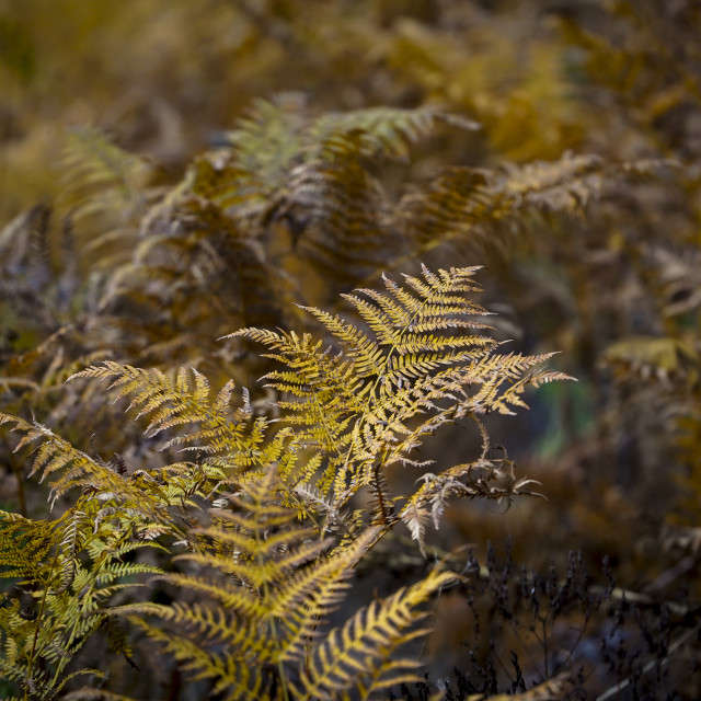 """""""ferns and autumn"""" stock image"""