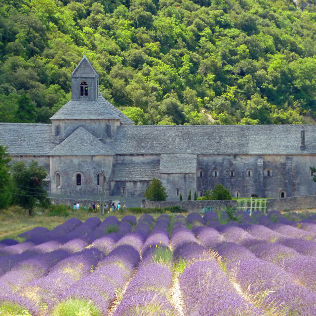 """Senanque Abbey France Lavender fields"" stock image"