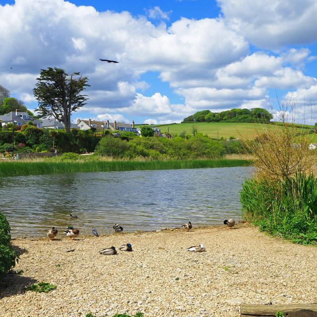 """Slapton Ley Nature Reserve Devon"" stock image"