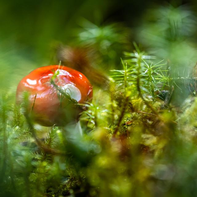 """""""Mushroom"""" stock image"""