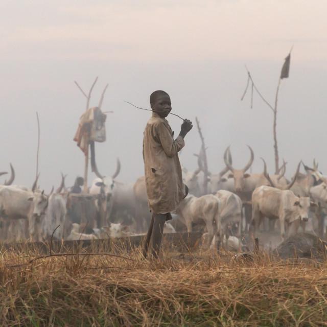 """Mundari tribe boy in a cattle camp, Central Equatoria, Terekeka, South Sudan"" stock image"