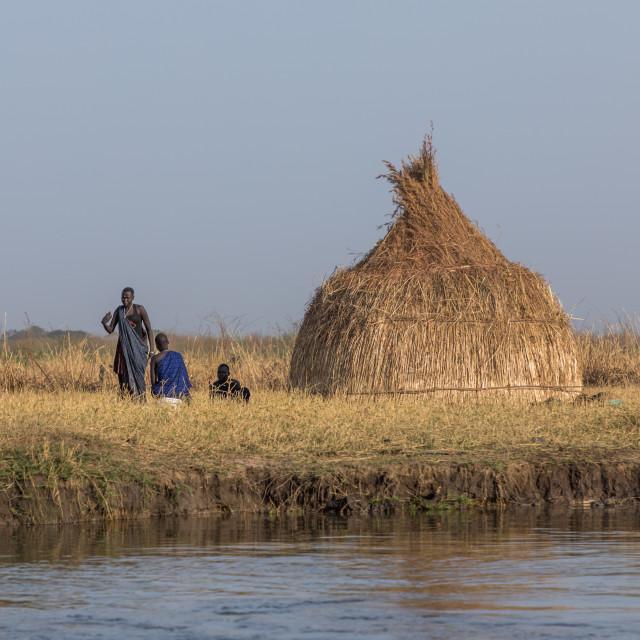 """Mundari tribe cow camp on the bank of river Nile, Central Equatoria,..."" stock image"