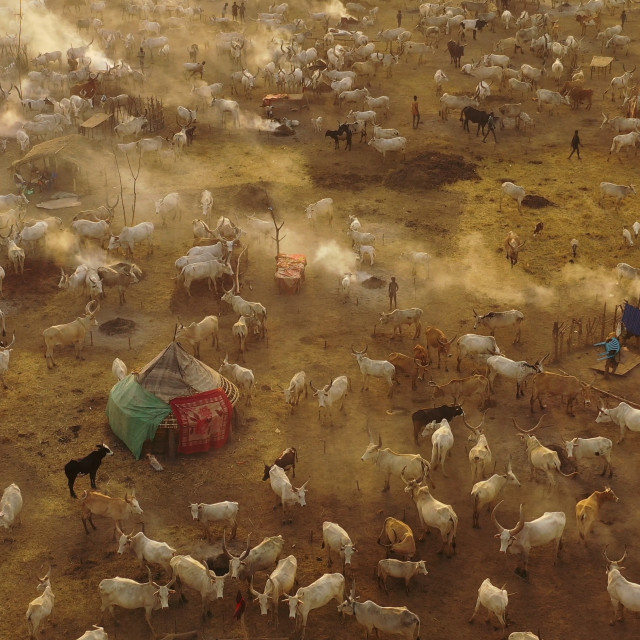 """""""Aerial view of long horns cows in a Mundari tribe cattle camp full of smoke,..."""" stock image"""