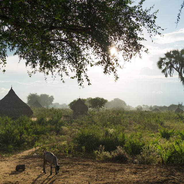 """Traditional Mundari tribe village, Central Equatoria, Terekeka, South Sudan"" stock image"