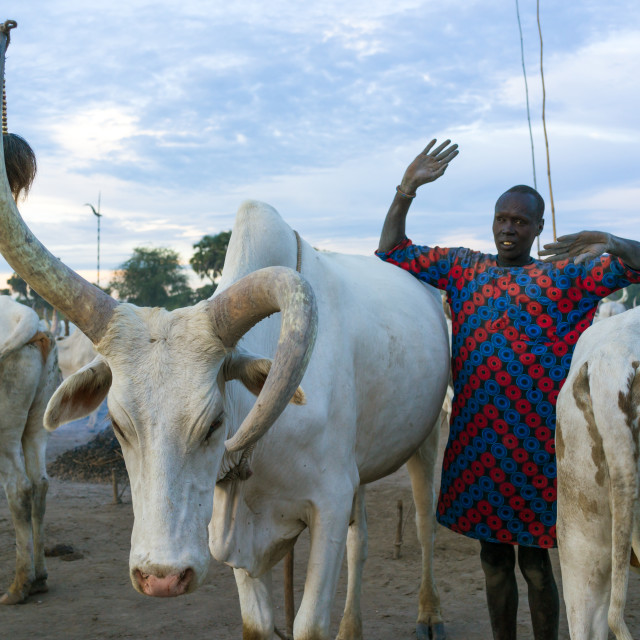 """""""A Mundari tribe man mimics the position of horns of his favourite cow,..."""" stock image"""