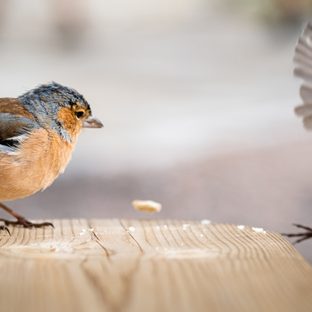 """""""Birds on Table"""" stock image"""